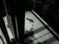 ちょっとだけ積雪