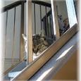 ご近所猫(200612)