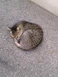 ご近所猫(200405)