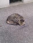 ご近所猫(200406)