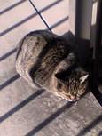 ご近所猫(200511)