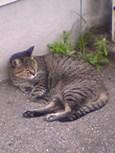 ご近所猫(200609)