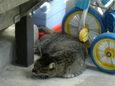 ご近所猫(20070925)