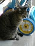 ご近所猫(20070926)