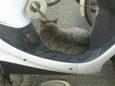 ご近所猫(20071010-1)