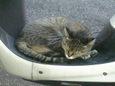 ご近所猫(20071010-2)