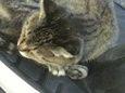 ご近所猫(20071010-4)
