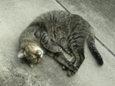 ご近所猫(20071012-1)