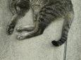 ご近所猫(20071012-2)