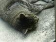 ご近所猫(20071012-3)