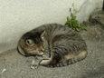 ご近所猫(20071017)