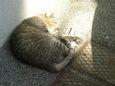 ご近所猫(20071018)