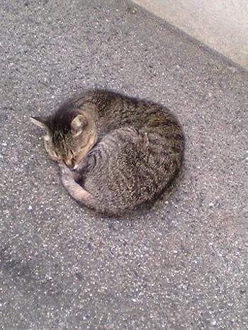 ご近所猫2004/05