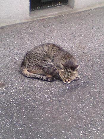 ご近所猫2004/06