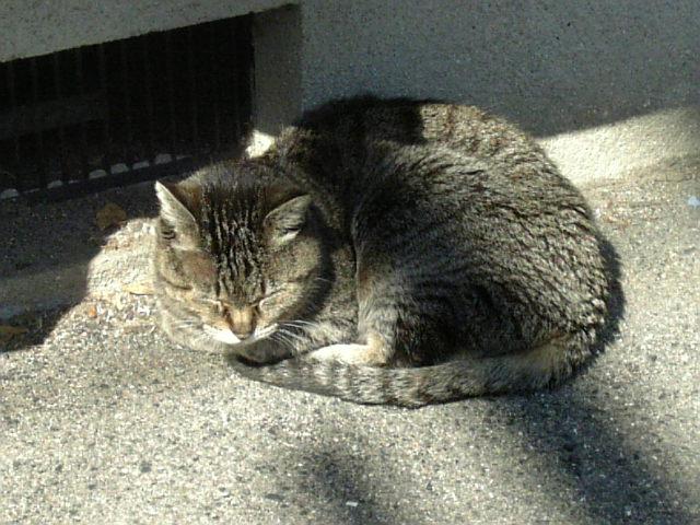 ご近所猫2008/03
